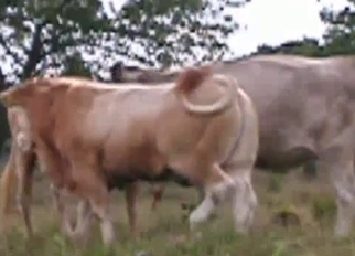 Two nice cows having amazing doggy style sex