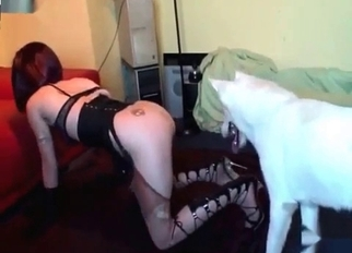 Sexy pussy is so attractive to a dog
