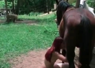Redhead teen zoofil sucking a stallion dick